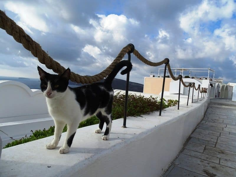 cats-in-Santorini