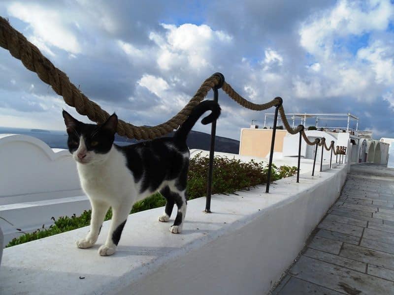 cats-in-Santorini