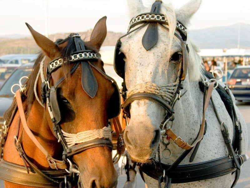 rent a horse carriage in Nafplio