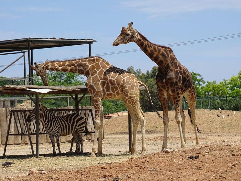 Attica Zoological Park