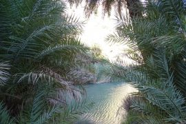 The Megas Potamos (river) and Palm tree forest at Preveli beach