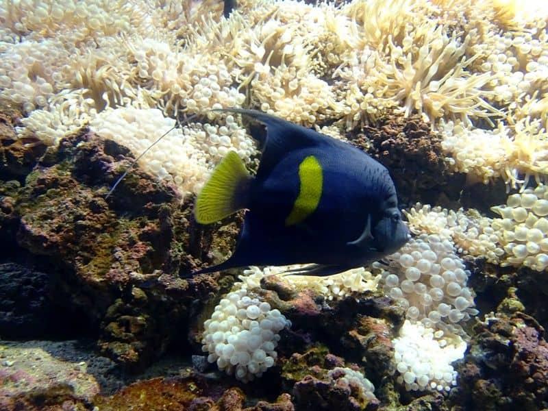 fish at- he Cretaquarium