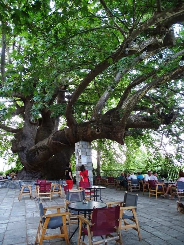 Agia Paraskevi square with the 1000-year-old plane tree in Tsagarada Pelion