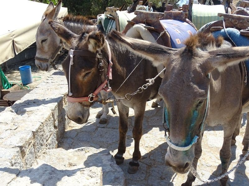 Donkeys resting at the top of the Acropolis Lindos
