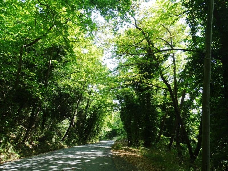 The road between the villages in Pelion Greece