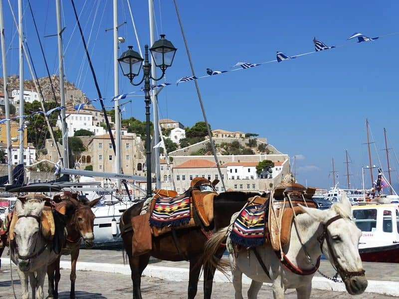 donkeys in Hydra - one day cruise from Athens