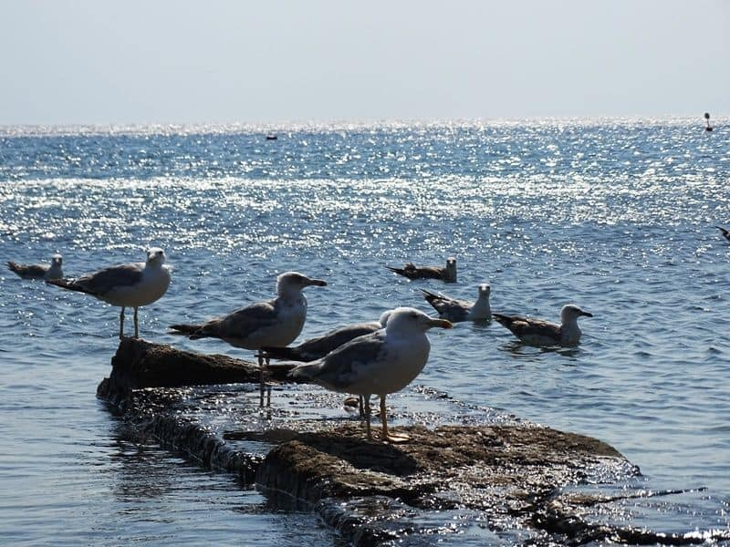 Sea Gulls at the beach
