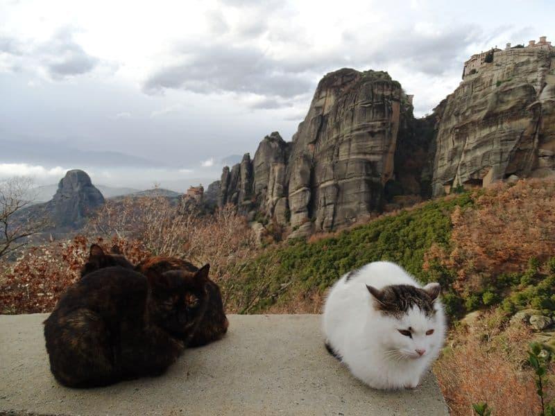 cats-enjoying-the-view-of-Meteora
