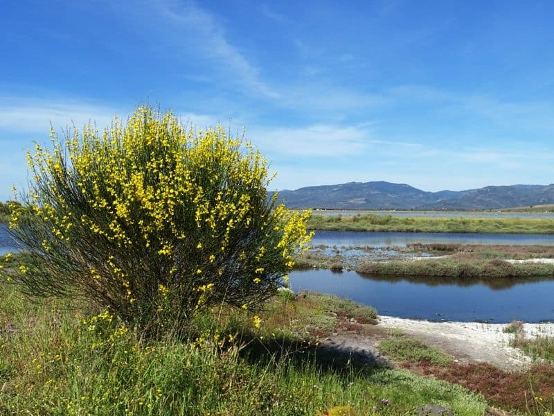 the marshes in Skala Kallonis