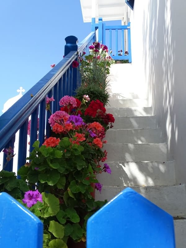 beautiful flowers in Mykonos
