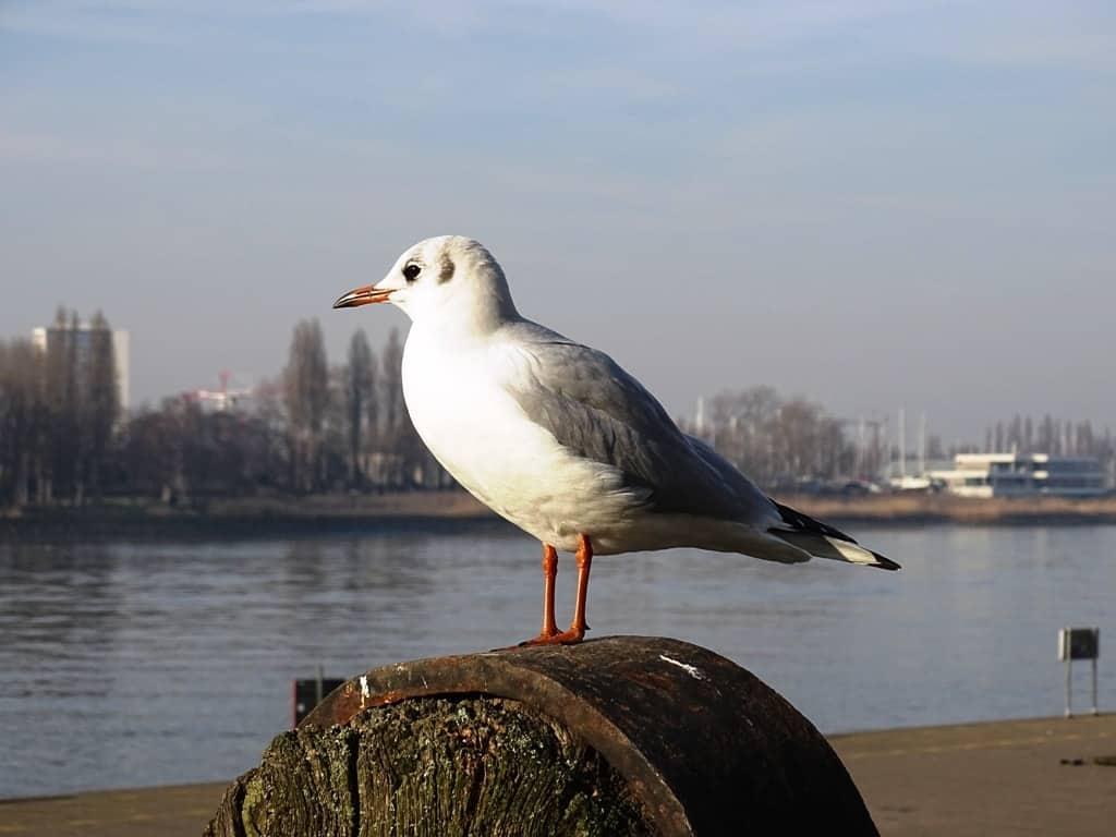 river Scheldt Antwerp