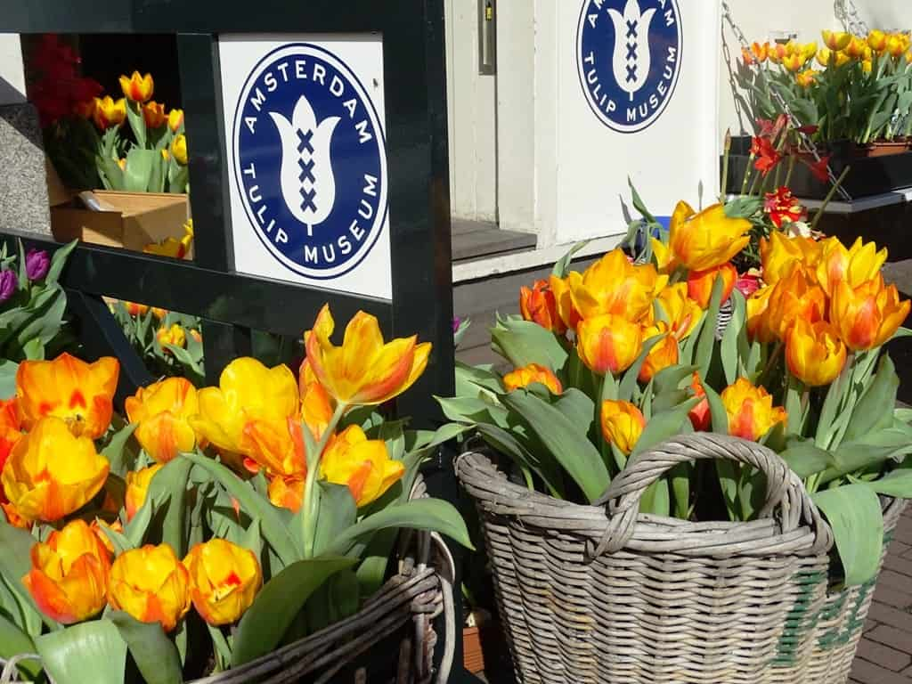The Tulip Museum In Jordaan