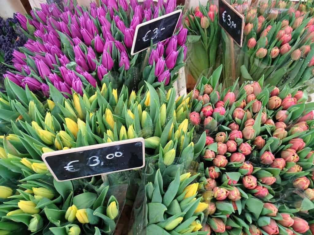 Tulips in Utrecht - Things to do in Utrecht
