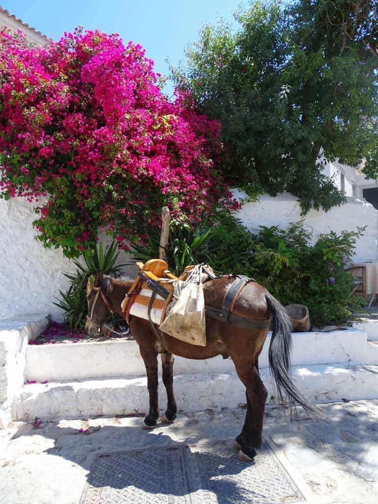 donkey in Hydra - things to do in Hydra