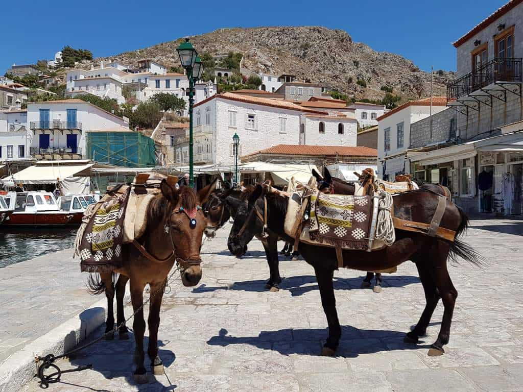 donkeys at Hydra harbour