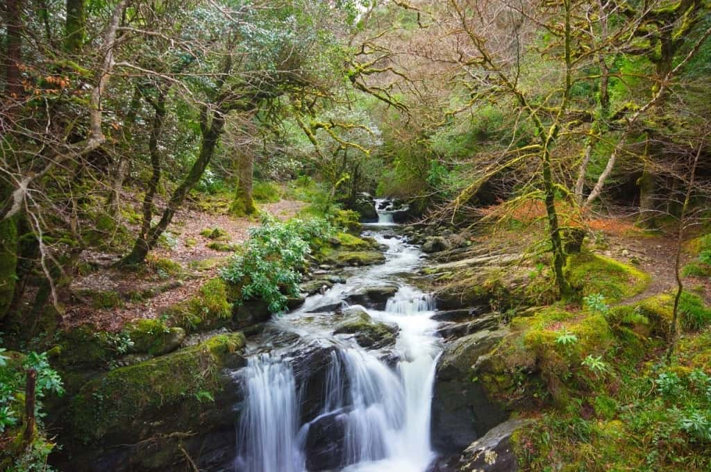 Torc Waterfall -Things to do in Killarney, Ireland