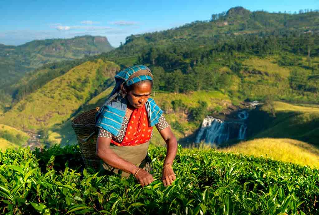 Sri-Lanka-Tea-Plantations