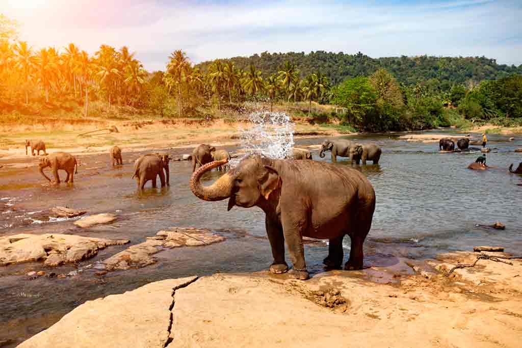 Sri-Lanka-wildlife