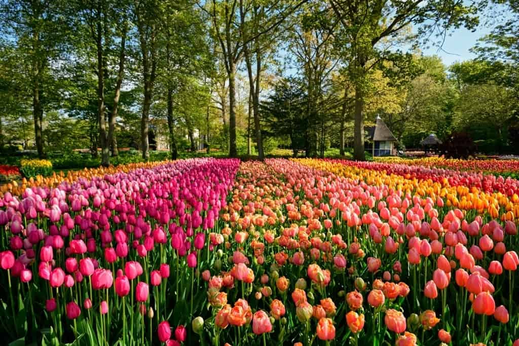 Most beautiful villages in the Netherlands - Lisse