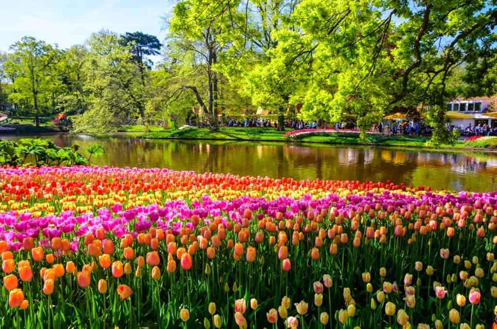 Best Places to Visit in Europe in March Keukenhof