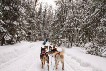 Dogsledding in Huntsville Ontario - places to visit in winter
