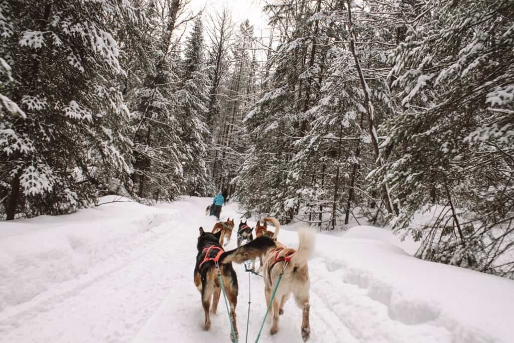 Dogsledding in Huntsville Ontario - places to visit in winter