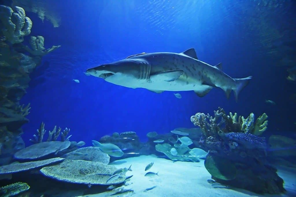 Palma Aquarium - things to do in Palma