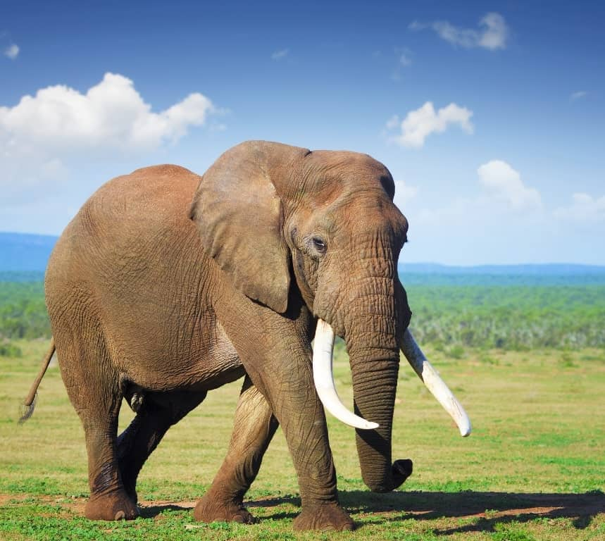 Addo Elephant National Park- -places to visit in South Africa