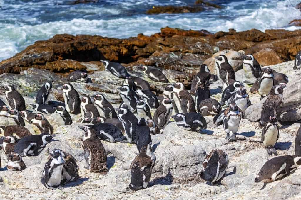 Betty's Bay - best places to visit in South Africa