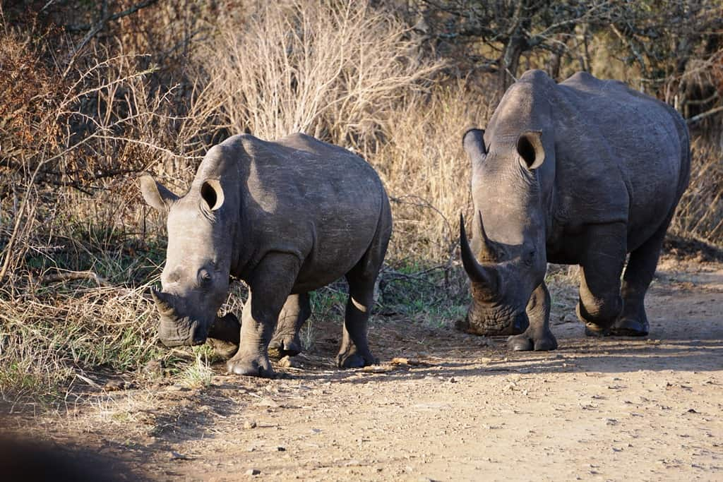 Hluhluwe Game Park - Places to visit in S Africa