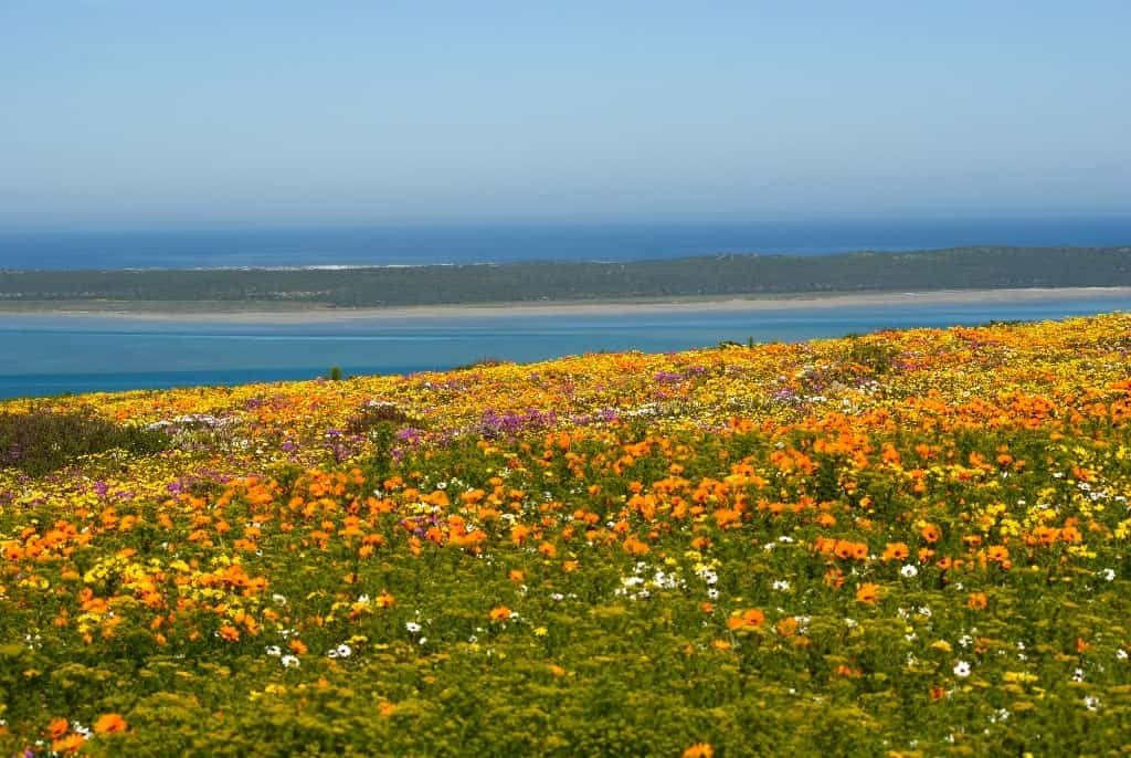 Namaqualand - best places to visit in South Africa