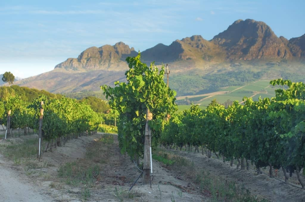 Stellenbosch - best places to visit in South Africa