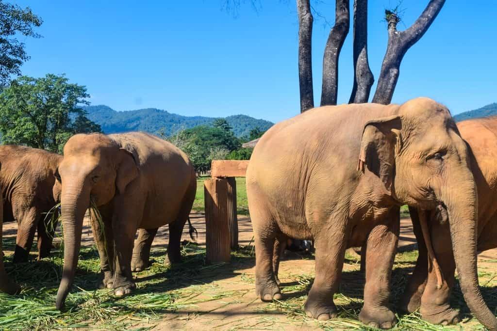 3 Day Chiang Mai Itinerary Elephant Nature Park