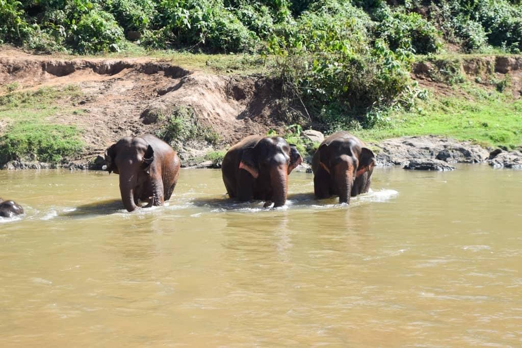 3 Day Chiang Mai Itinerary Elephants Bathing