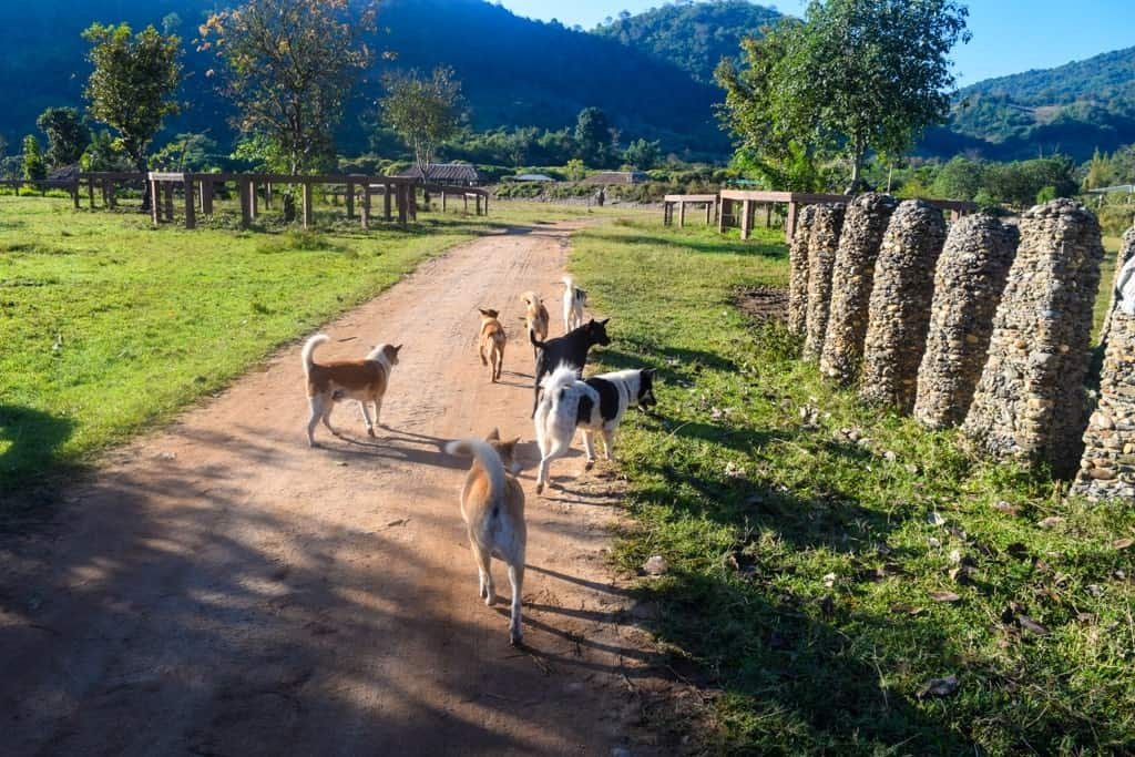 3 Day Chiang Mai Itinerary Rescue Dogs