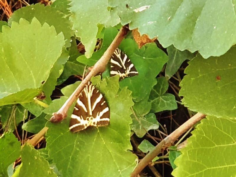 Butterflies in Paros